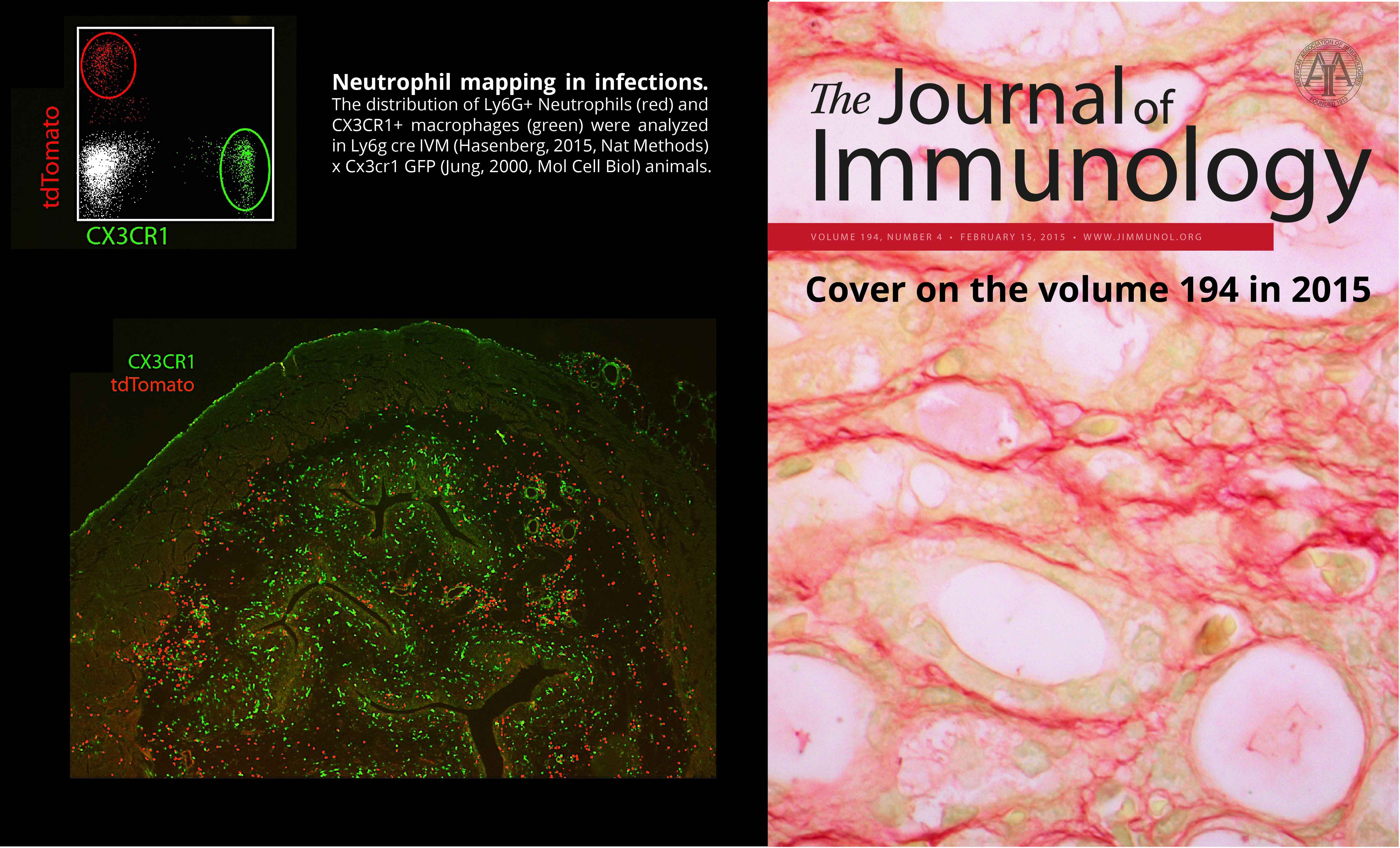 Neutrophil-mapping1